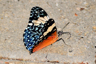 Blue Patterned Butterfly