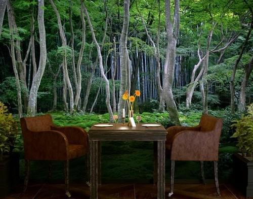 Maisematapetti Metsä Taustakuva valokuvatapetti Metsä taustakuva valokuvatapetti metsä puunrungot taustakuva metsän rahasto taustakuva