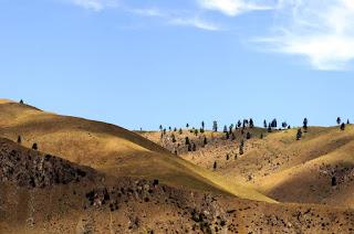 dry grassy mountains in Chelan, Washington