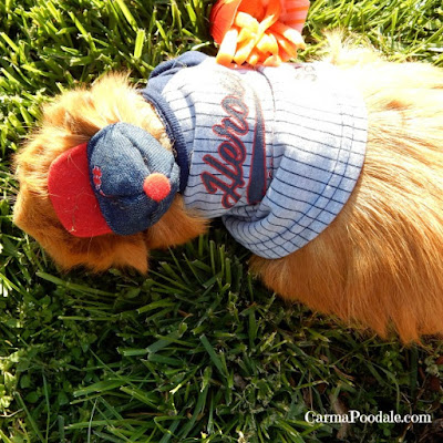 Cinnamon in his baseball outfit