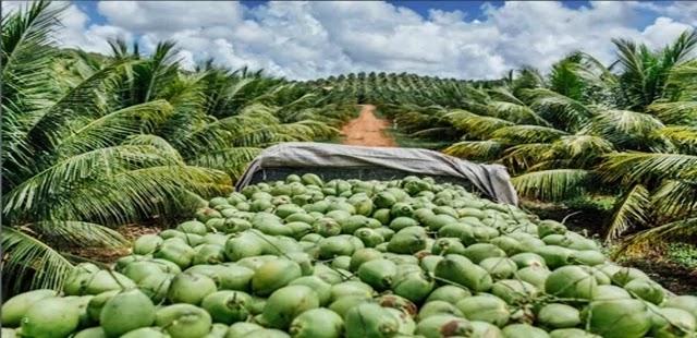 Um anúncio de demissão em massa pegou de surpresa, na semana passada, cerca de 300 funcionários do grupo Aurantiaca, detentor da empresa de água de coco da marca Obrigado