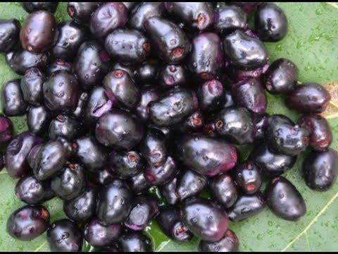 Di luar dugaan, ini adalah manfaat buah duwet untuk kesehatan.