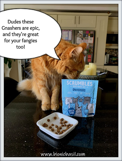 Fudge Taste Testing Scrumbles Gnashers ©BionicBasil® The Pet Parade 362 a