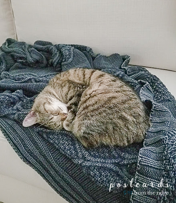 sleeping kitty on stonewashed blue throw blanket