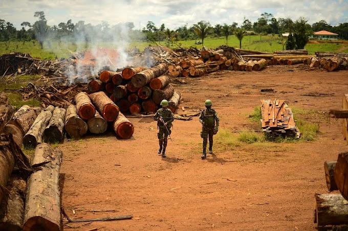 AMAZÔNIA LEGAL: Em um dia, Verde Brasil 2 aplica mais de R$ 12 milhões em multas