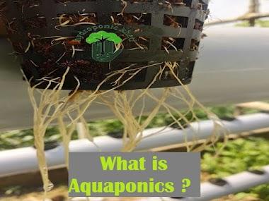 What is Aquaponics ?