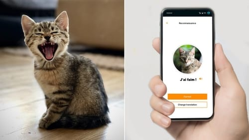 MeowTalk .. an application to translate cats' meow