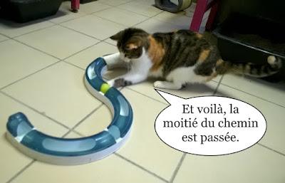 Une chatte tricolore en train de jouer.