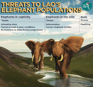 The end for Lao's elephants?