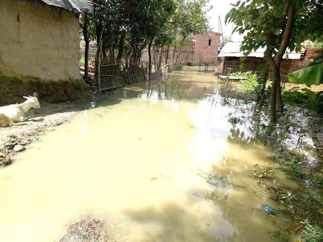 सोहरौल में टूटे तटबंध से गांव में घुसा बाढ़ का पानी