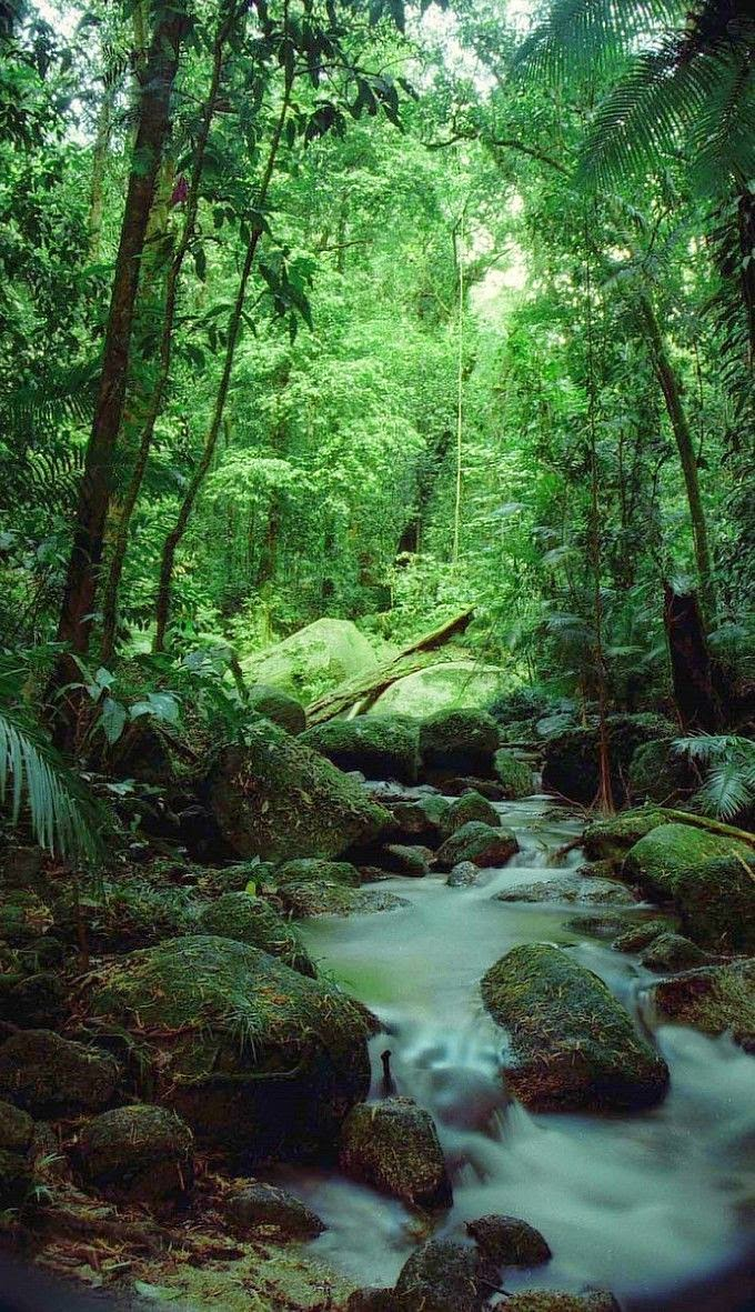 The Daintree, Queensland, Australia 10 Worlds Amazing And Beautiful Forests