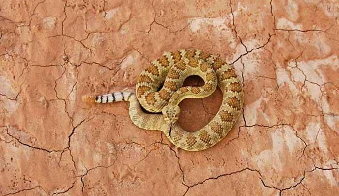 ular Derik Grand canyon