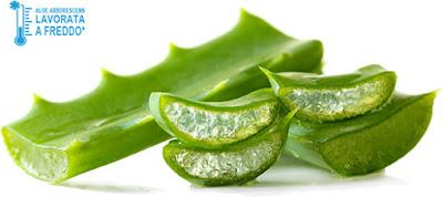 Buone ragioni per scegliere l'Aloe Arborescens per star bene