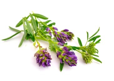 Rosemary For Hair Loss Treatment