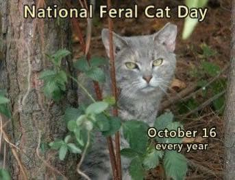 National Feral Cat Day Wishes Awesome Images, Pictures, Photos, Wallpapers