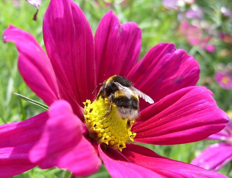 Kelli's Northern Ireland Garden: Bee Buzzing Summer