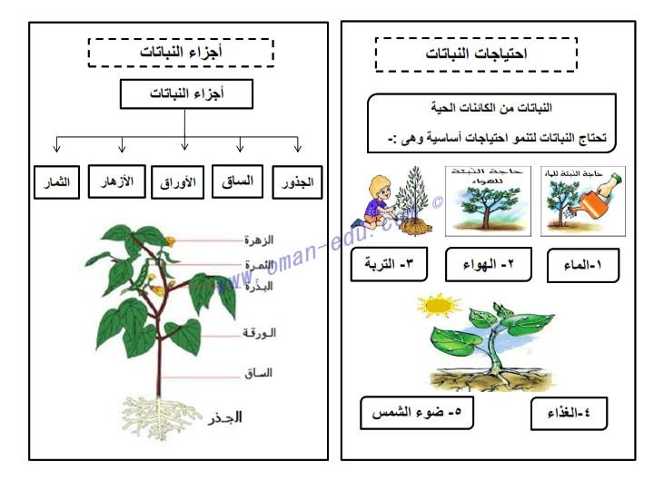 اجزاء النبات ووظائفها للصف الثالث