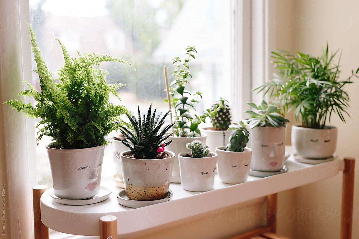 أهم أسباب قتل النبات المنزلي وحلوله