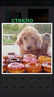 за стеклом стоит собака и смотрит на пирожное на прилавке