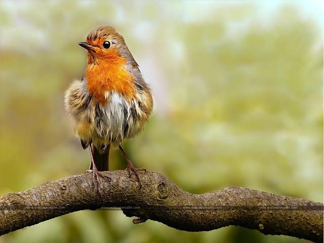 Bird Images | Bird Wallpaer HD Free Download