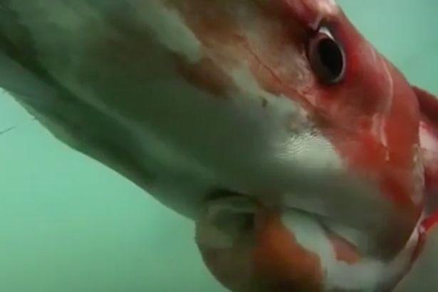 Seekor Makhluk Raksasa Muncul Dari Dalam Laut