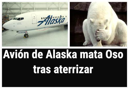 Avión de Alaska Airlines mata a un oso pardo al cruzar la pista