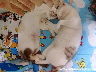 Kucingku Lebih Romantis Daripada Kamu Yang Pacaran 5 Tahun Nggak Diajak NIKAH