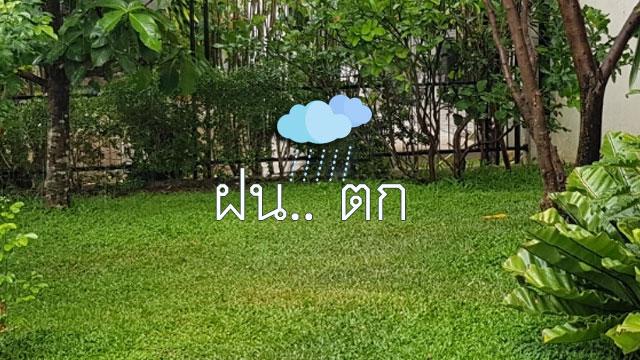 ฝนตกชุ่มฉ่ำ