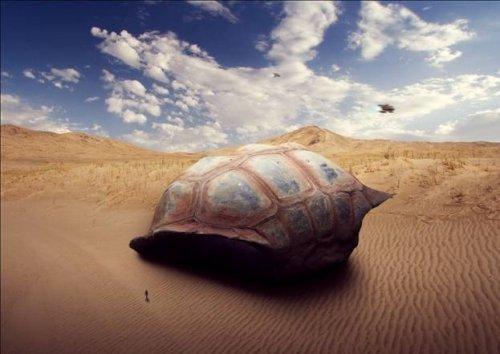Sci-Fi Giant Tortoise Shelter Photo-Manipulation
