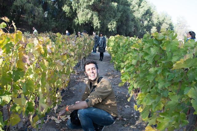 vinicola uvas concha e toro chile