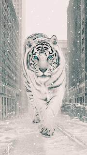 The White Tiger Mobile HD Wallpaper