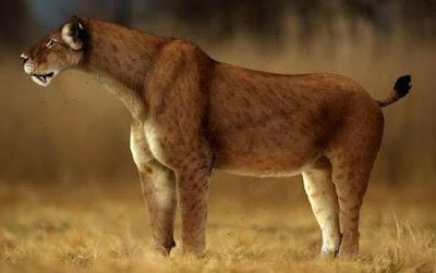 Felino prehistórico Machairodus kabir