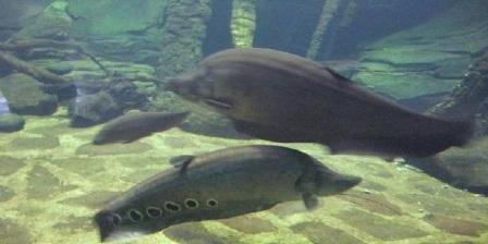 harga tiket akuarium air tawar taman mini harga tiket masuk akuarium air tawar taman mini akuarium air tawar taman mini indonesia