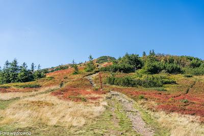 Ścieżka na Małą Babią Gorę z Przełęczy Brona
