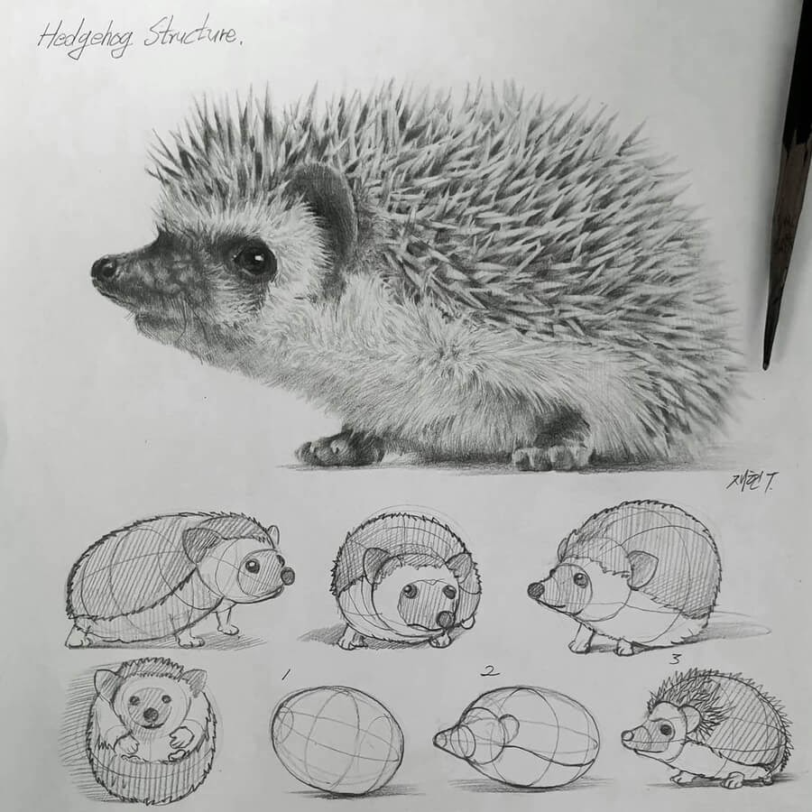 08-Little-hedgehog-Anjjaemi-www-designstack-co