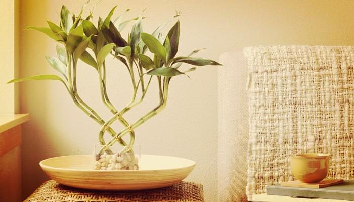 Bambu de interior
