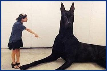 Größte Hunderassen der Welt