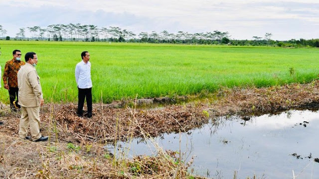 Diunggulkan Jokowi-Prabowo, Lumbung Pangan di Kalteng Terancam Gagal Panen