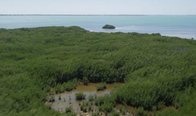 cara melestarikan hutan mangrove