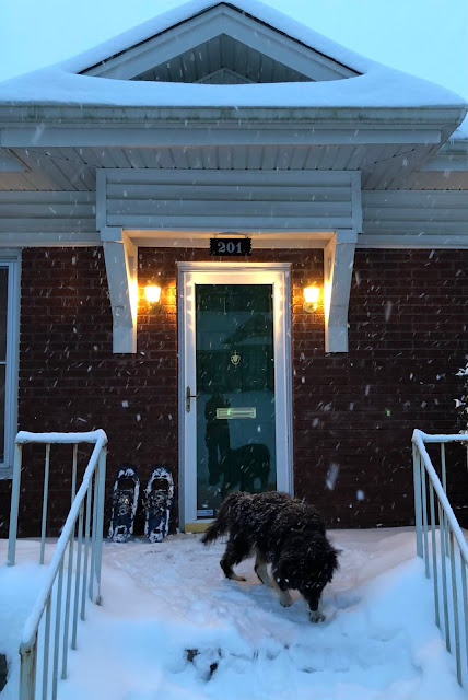 front door of house and dog in snow