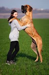What Kind of Dog is Scooby Doo   Scooby Doo Dog Breed