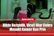 Bikin Bergidik, Viral! Ular Cobra Masuki Kamar Kos Pria