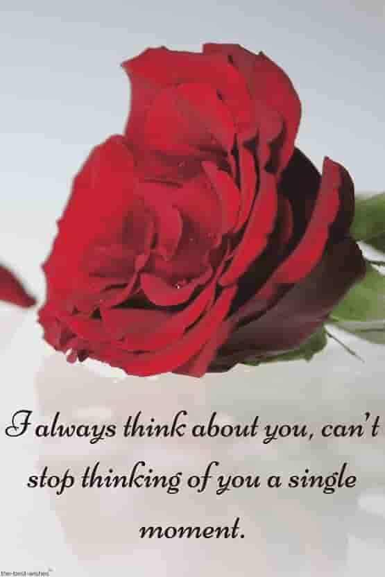 love quotes for bf with red rose