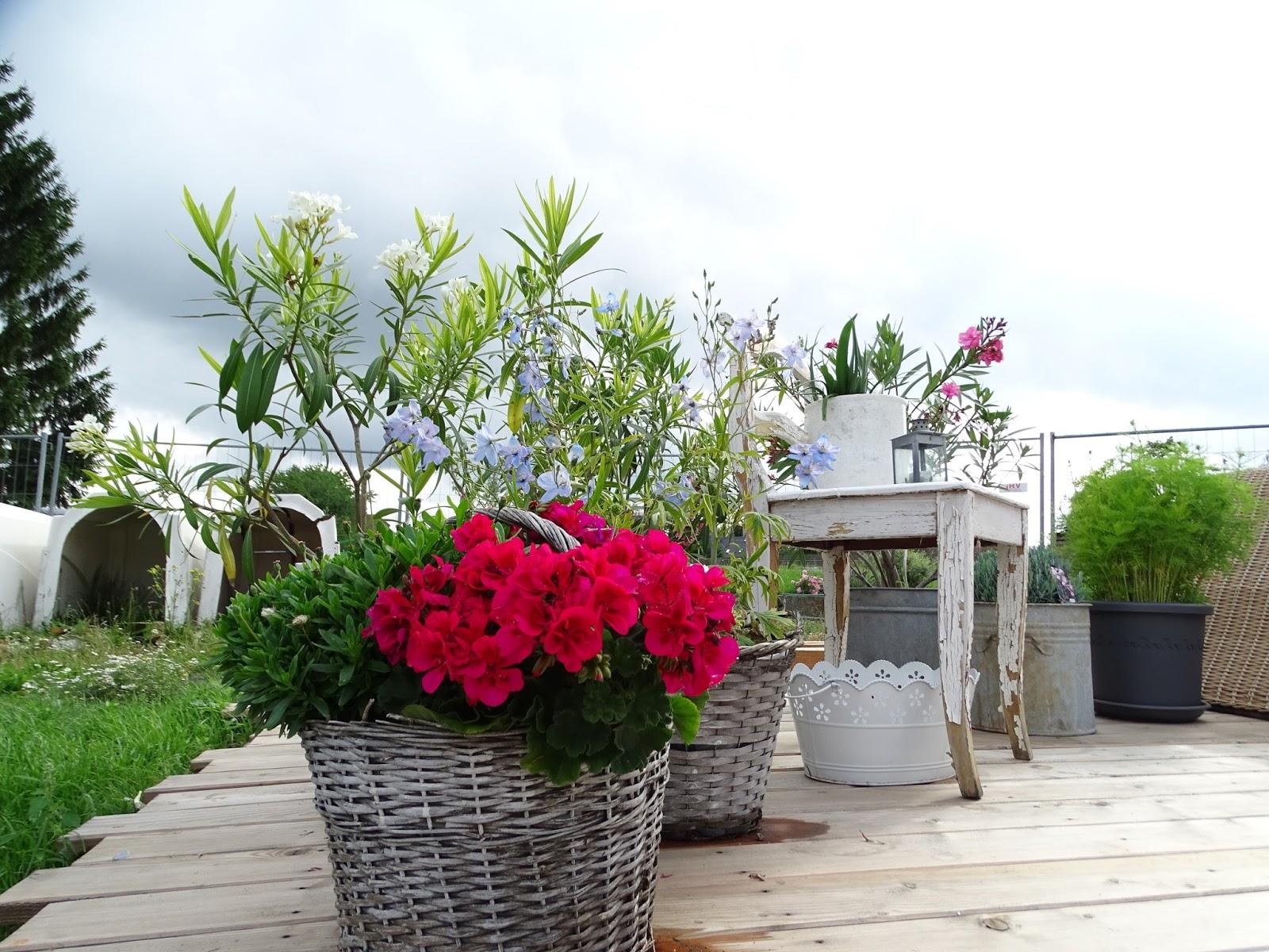 Manus White Love Rosenbogen Terrasse Garten Hallo Sommer