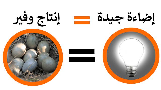 الإضاءة الإصطناعية للطيور - طريقة التشغيل و الأدوات