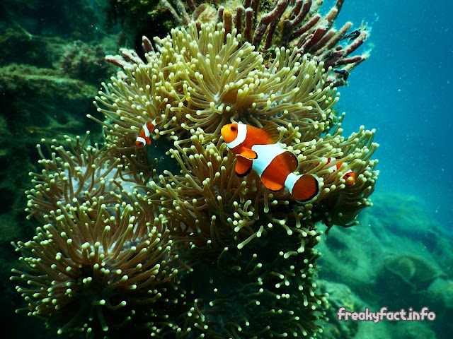 amazing facts about the coral reef