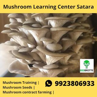 Mushroom Training Center Satara