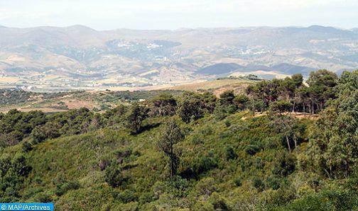 معدل اجتثاث الغابات في إفريقيا يفوق ثلاث مرات المعدل العالمي