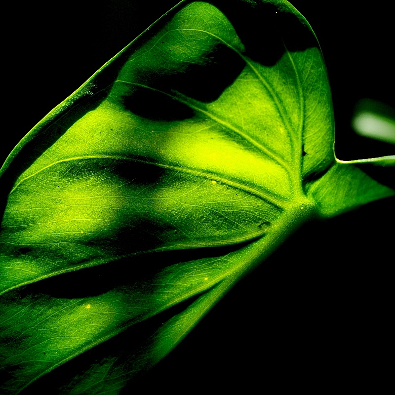 M.Zuiko Digital ED 60mm f/2.8 Macro 04