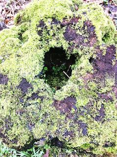 Einsicht in den hohlen Baumstumpf gefunden im Schlßpark Herten